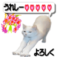 Sticker of a white cat like an angel