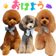 friends of toypoodle