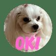 OKIKA
