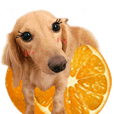 萌妞臘腸阿橘橘_3