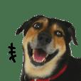 戲謔犬控肉
