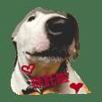 Terrier terrier