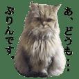 猫写真【チンチラ猫のぷりんさん】part2