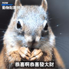 動物星球頻道 觀察語錄:賀年大貼圖篇