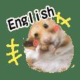 ゴールデンハムスター小麦さん 英語版