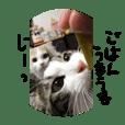 mugita.cats