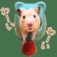 Golden hamster Mugi's life2