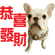 2018 HAPPY CHINA DOG YEAR