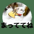 s dog family