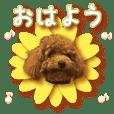 温柔自然玩具贵宾犬(3)