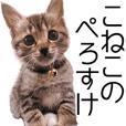 kitten Perosuke