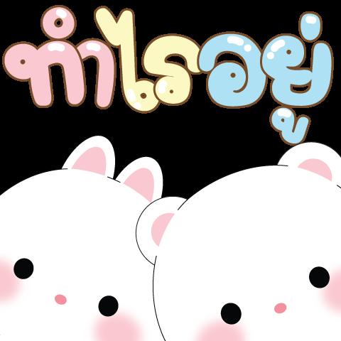 Micool & Taicutie Pop-Ups