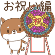 Shiba dog for celebrations