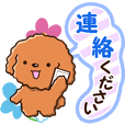 Polite Toy poodle (Honorific version)