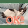 猫のるぅ。