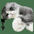 Kuma Cat