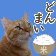 ざ・にゃんこスタンプ9ダジャレ編