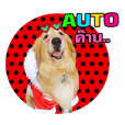 Auto Golden Retriever