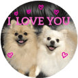 Pomeranian Leo and max10.Love sticker.