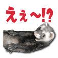 Funny pretty ferret Sticker