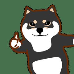 Doggy Daily Lives of  Shiba Inus 2
