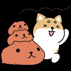Shibasays × Kapibarasan Crossover