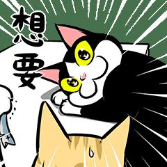 賓士貓Ohagi 13