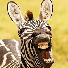 搞笑野生動物攝影獎  歡樂登場
