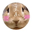 実写版★うさぎのみるこ