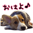Gen is cheerful  Corgi.everyday ver.