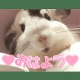 ((♥︎︎チンチラとその仲間たち♥︎︎))