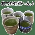 実写!緑茶