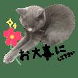 よく使う敬語 丁寧語 灰色猫 みさお 40個版