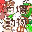 Stupid animals from Taiwan