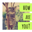 koala photo sticker