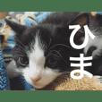 はちこ(日常)