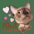 Mimi Brownie Kitten