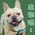 French Bulldog Fatty