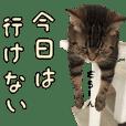 ねこスタンプ(よく使う)
