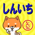 超★しんいち(シンイチ)な柴イヌ