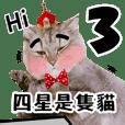 四星是隻貓Part.3