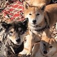 ペット里親会わんこVo.4 やっぱり日本犬!