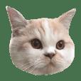 Dougan_cat