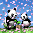 赤ちゃんパンダ《Movie 01》