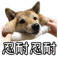shibainu KOHARU sticker in Taiwan 2