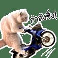 เหมียวเล็ก จอมกวน 9