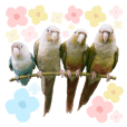 Delighted Parrots
