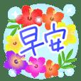 Hibiscus-CT