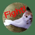 cat.futan5