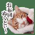 茨城弁のボスさん Vol.2